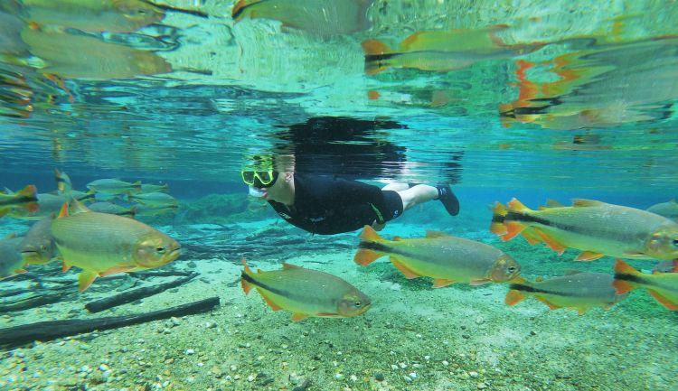 A flutuação no Recanto Ecológico Rio da Prata, atrativo em Jardim (MS), proporciona um passeio em um mundo subaquático acompanhados por diversas espécies de peixes.